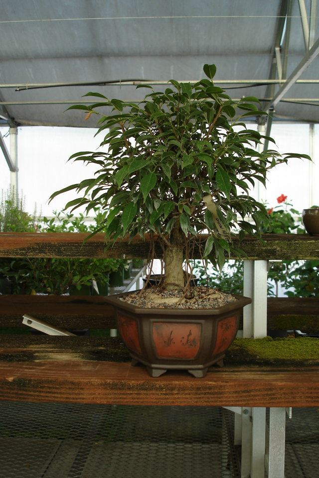 Bonsai Nursery Colorado Rocky Mountain Bonsai Suiseki